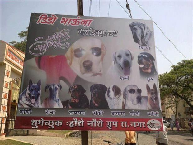 meanwhile in India (6)