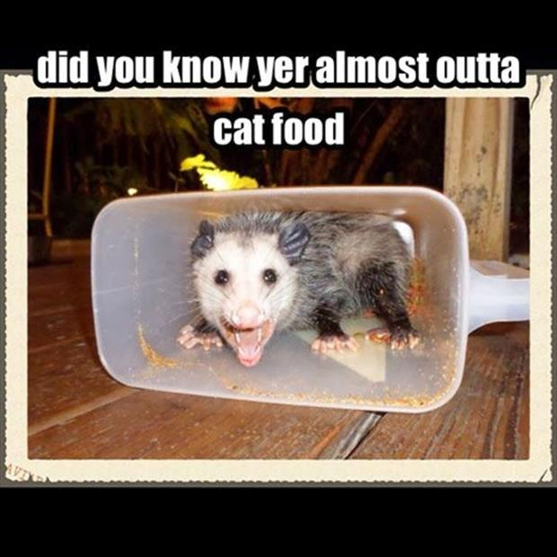 out of cat food