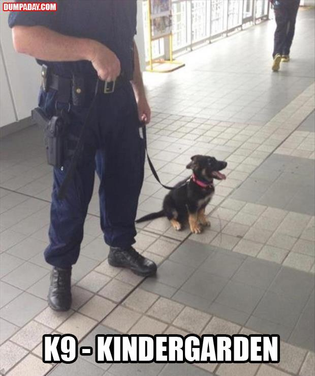 police dogs funny