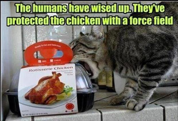 protected chicken