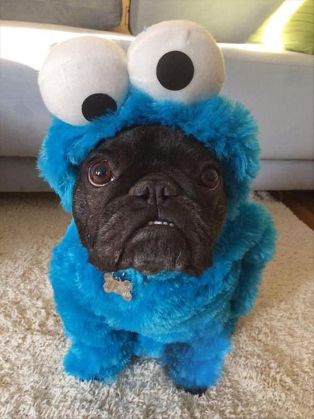 pug dog cookie monster