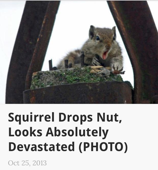 squirrel drops his nut