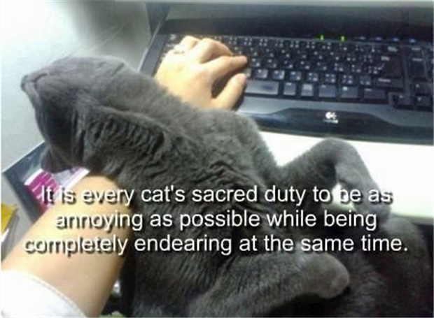 the problem with cats