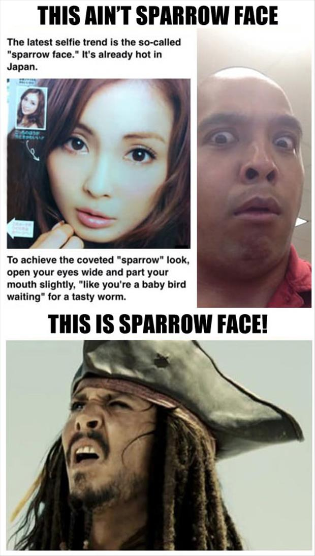 this is sparrow face