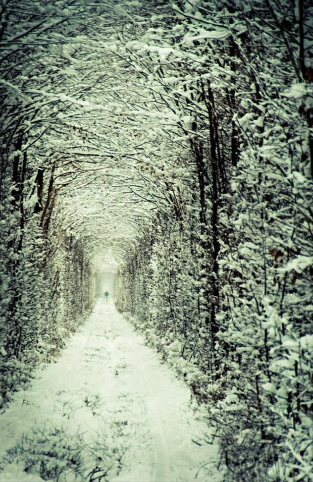 tunnel of love, winter scene, picture of the day