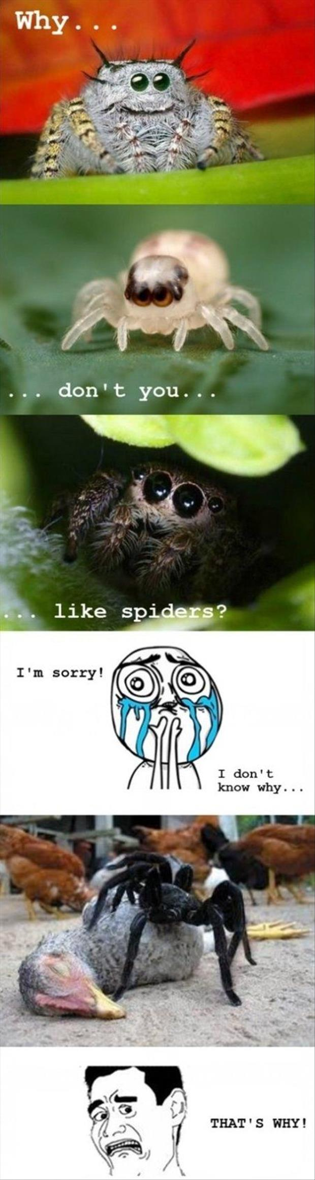 why don't you like spiders