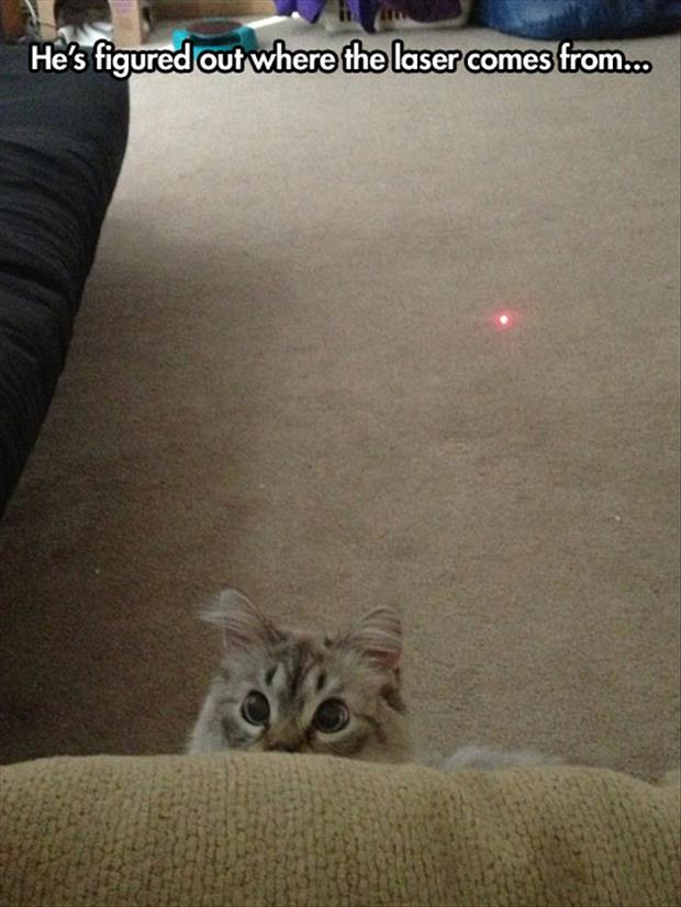 cat knows where the laser comes from