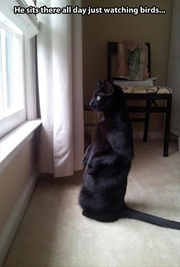 cat watching birds