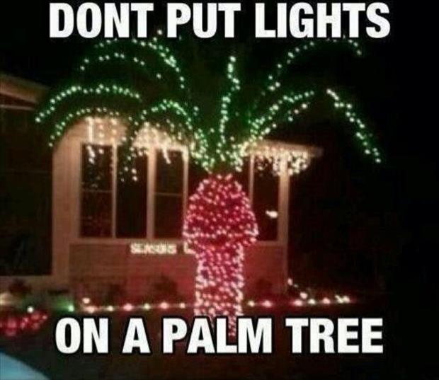 christmas lights on a palm tree