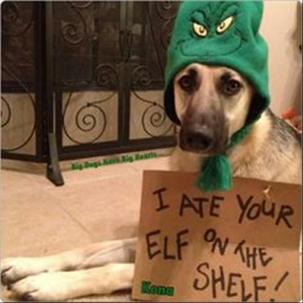 dog ate elf on the shelf