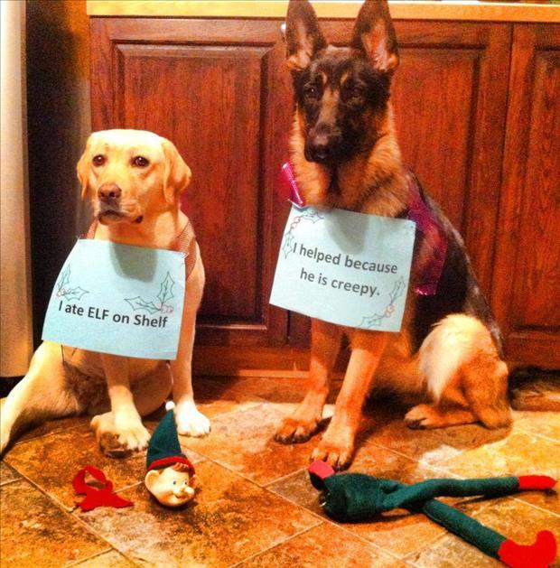 dog shaming elf on the shelf