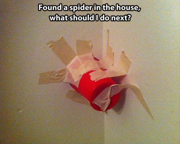found a spider in the house