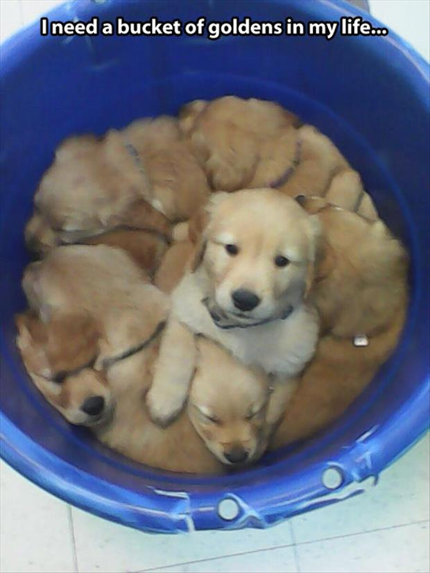funny bucket of puppies