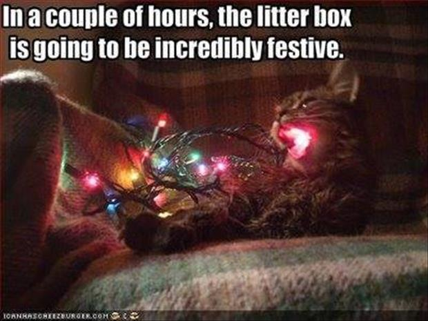 funny cat eating christmas lights