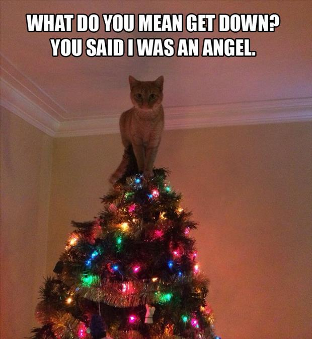 funny cat on top of christmas tree