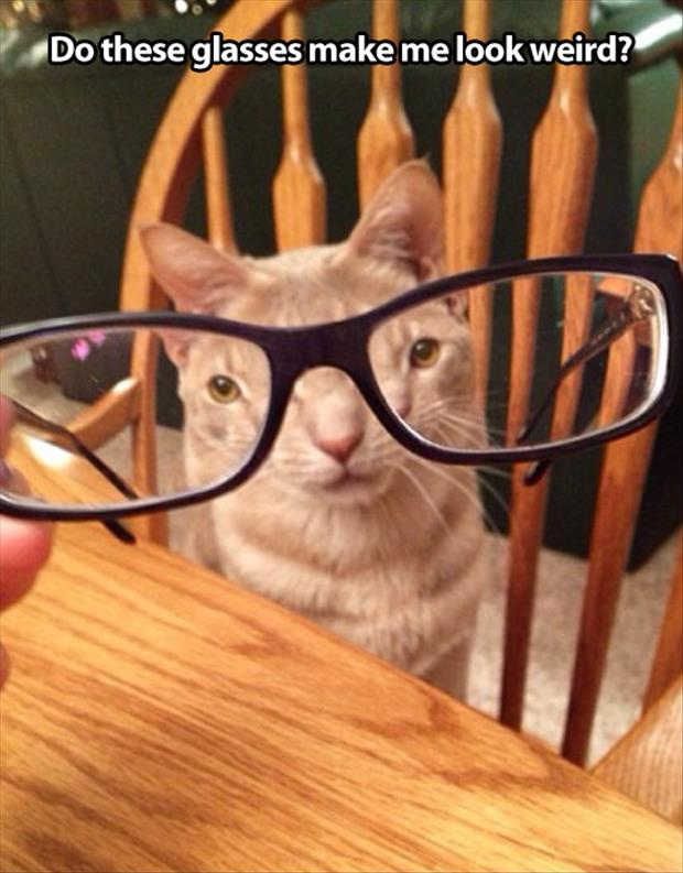 funny cat with glasses