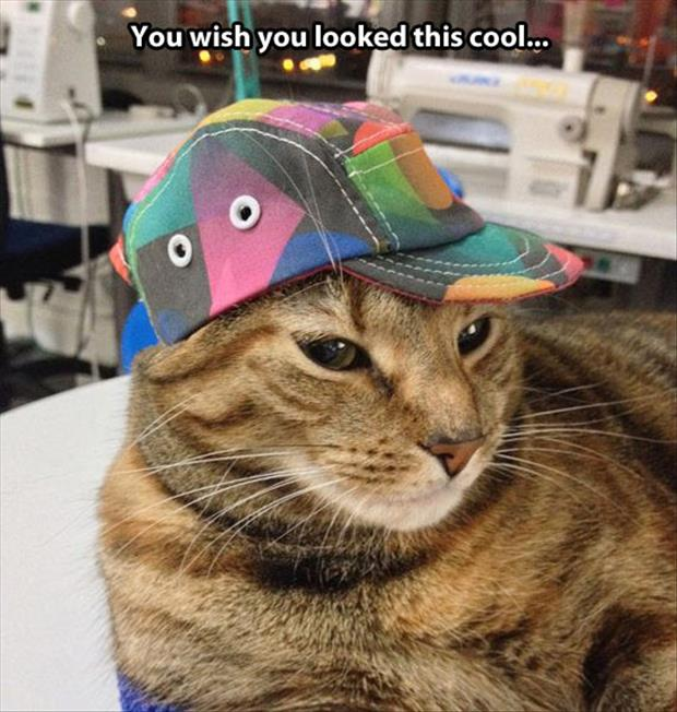 funny cat with hat