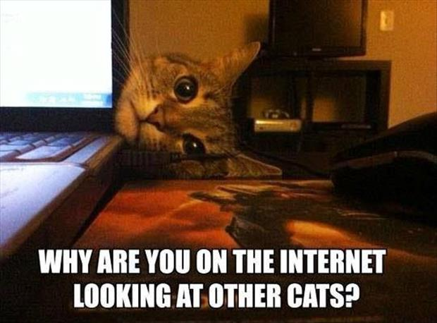funny cats on the internet