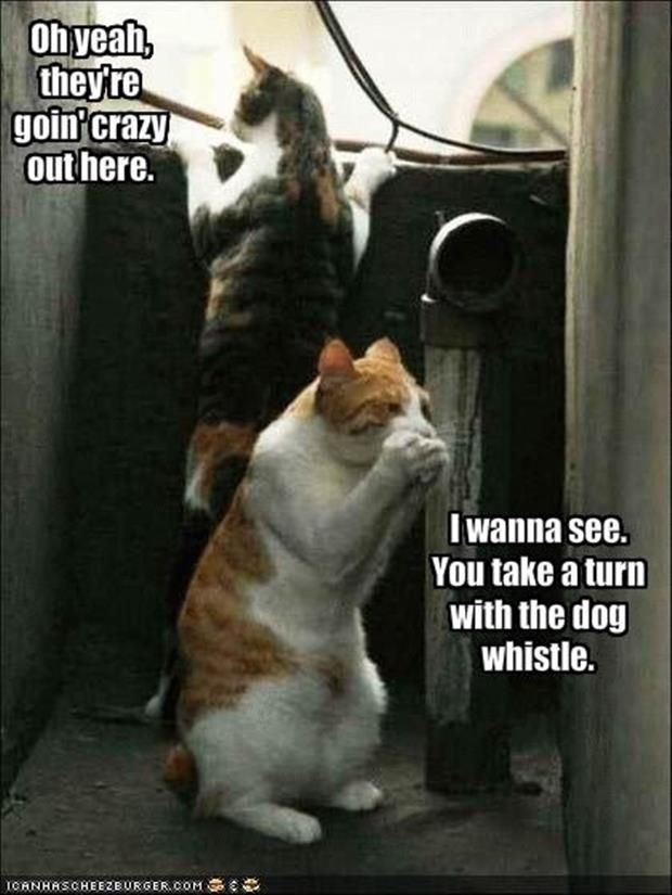 funny cats with dog whistles