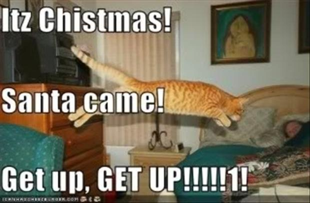 funny christmas pictures (13)
