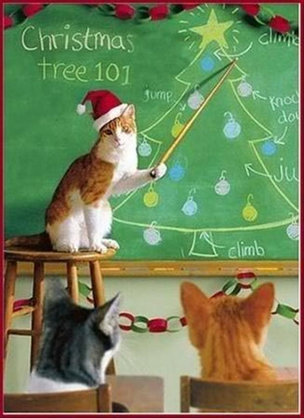 funny christmas pictures (14)