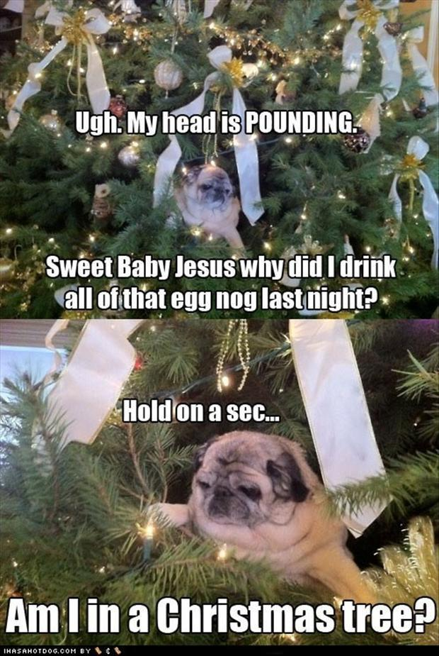 funny christmas pictures (18)