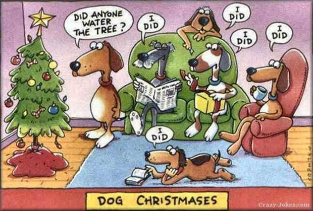 funny christmas pictures (19)