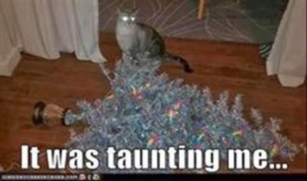 funny christmas pictures (37)