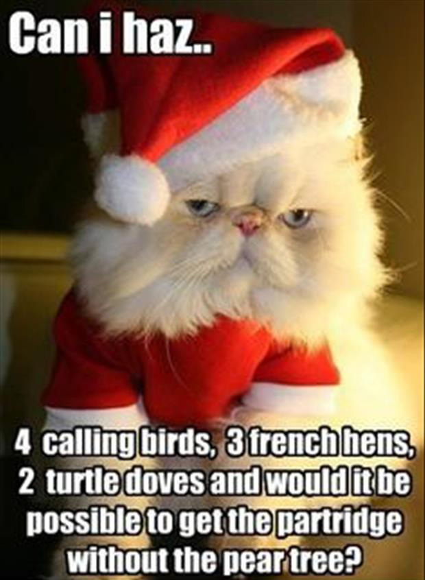 funny christmas pictures (5)