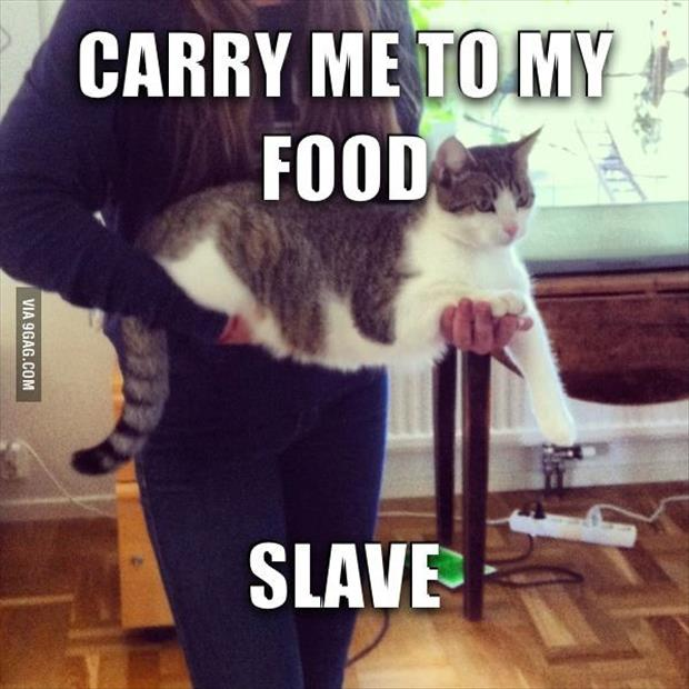 hilarious pictures of fat cats - photo #8