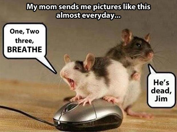 funny mouse pictures