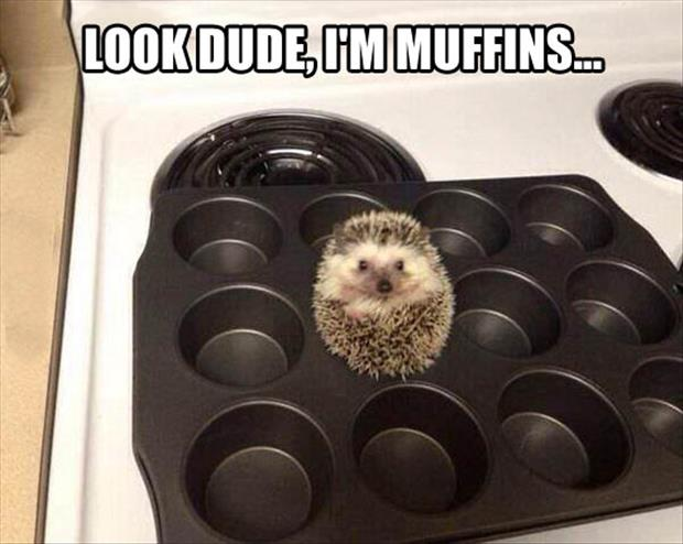 funny muffins