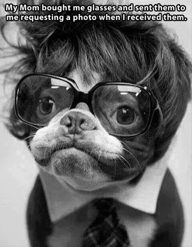 glasses on a dog