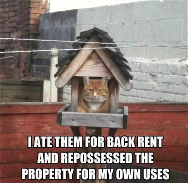 landlord cat