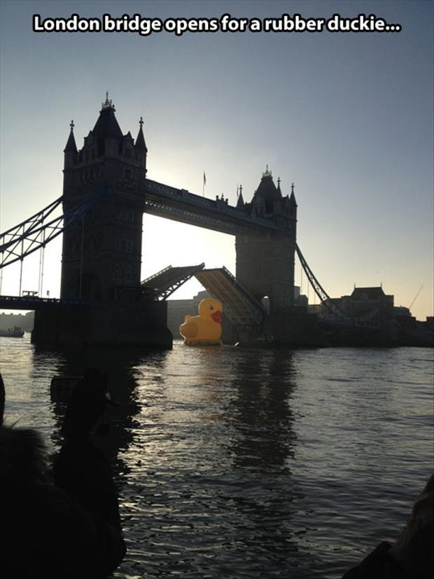 london bridges opens for a duck