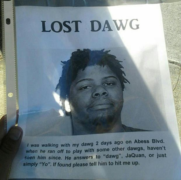 lost dog signs
