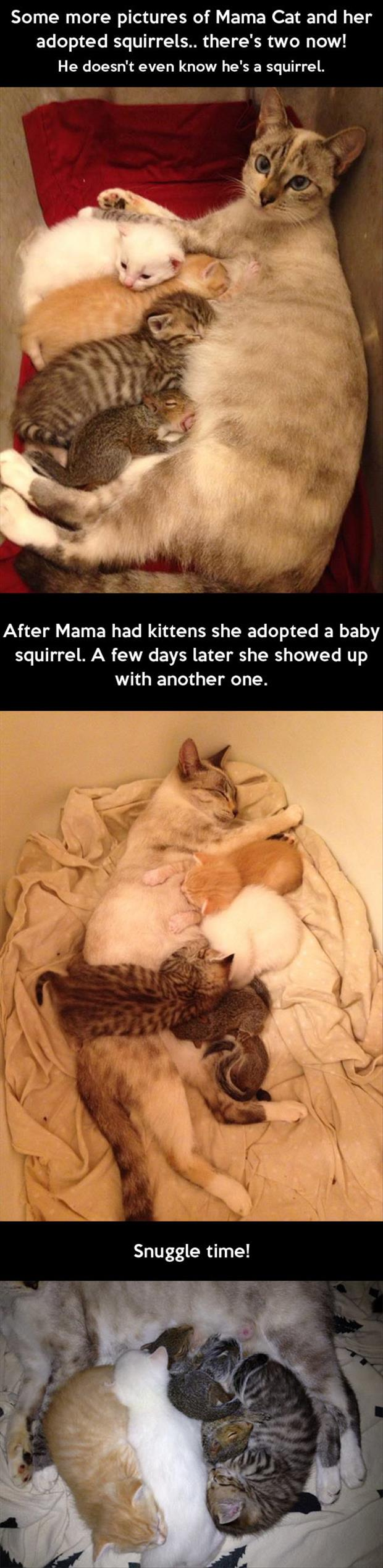 mama cat adopts a baby squirrel