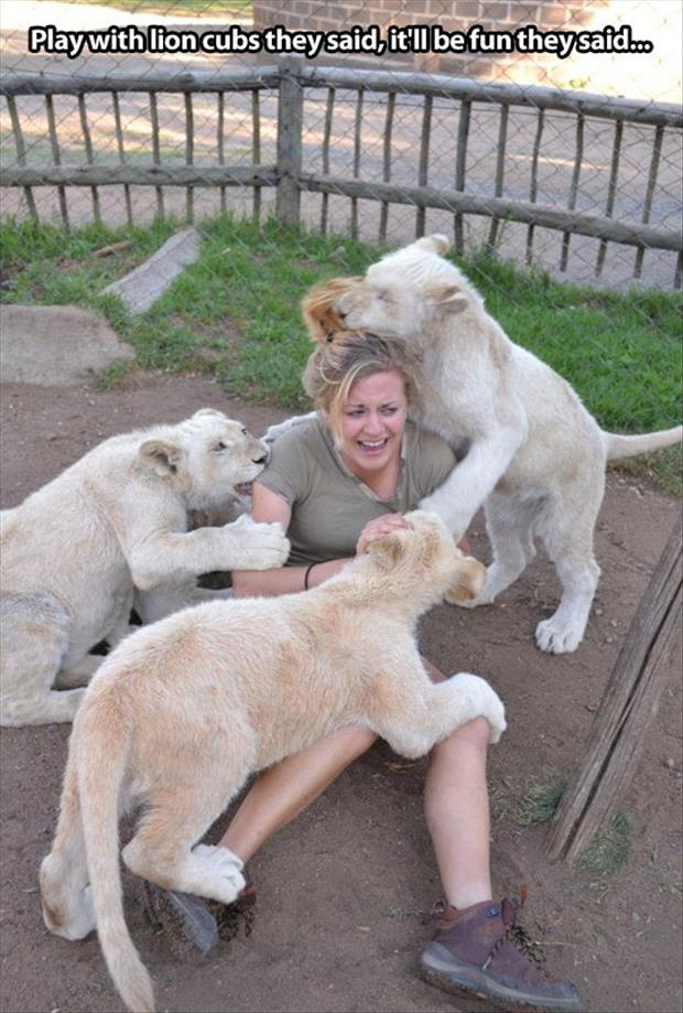 playing with lions