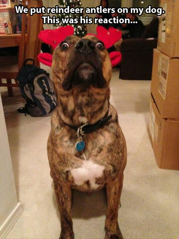 reindeer antlers on the dog