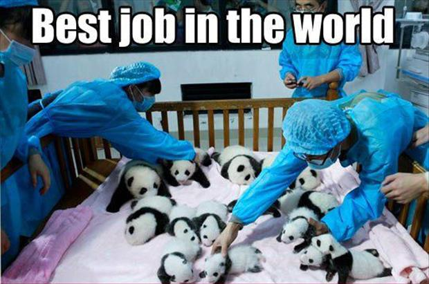 the best job ever