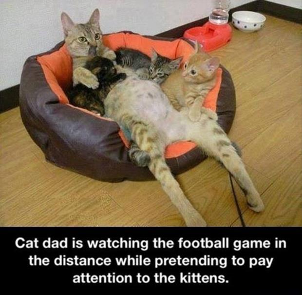 the cat dad