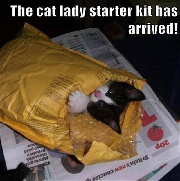 the cat lady starter kit