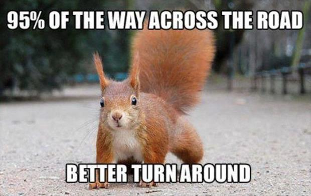 the squirrel crossing the road