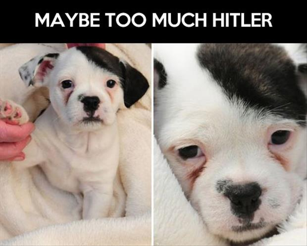 to much hitler