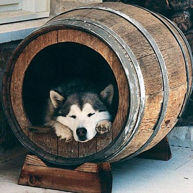 uses for old barrels (6)