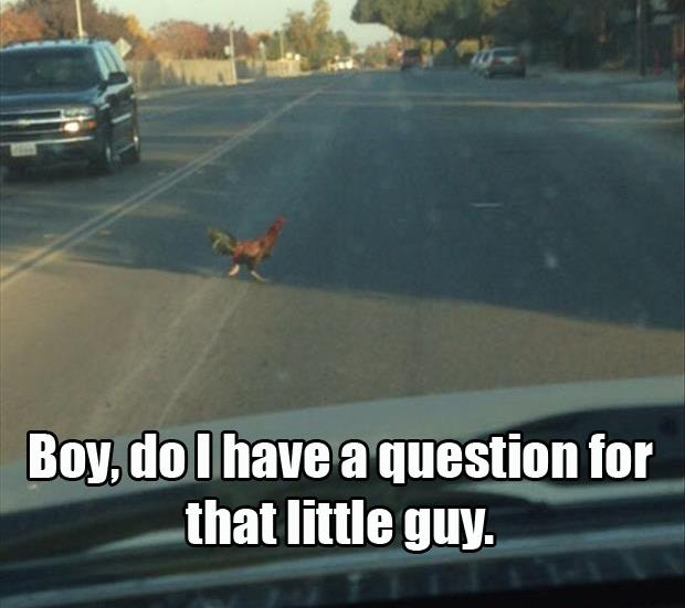 why did the chicken cross the road i have a question for that guy