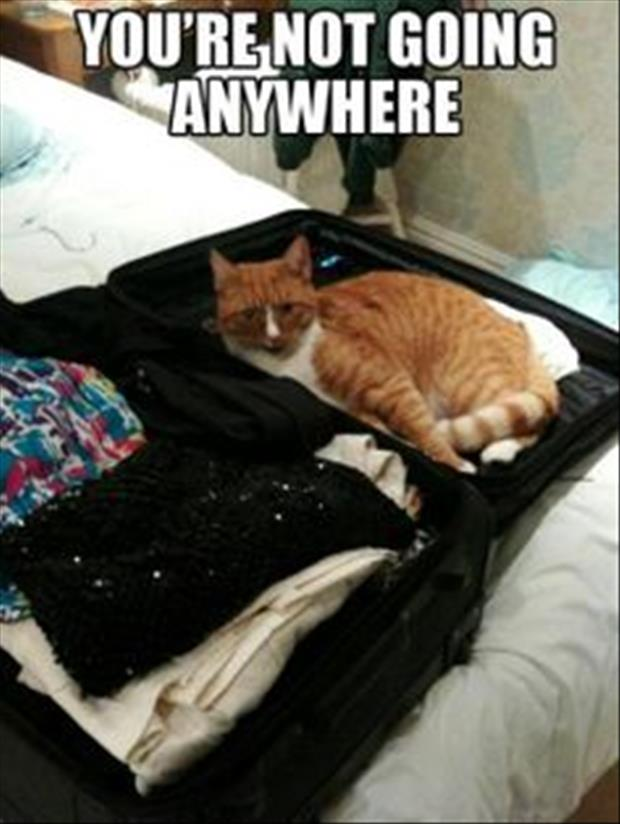you're not going anywhere