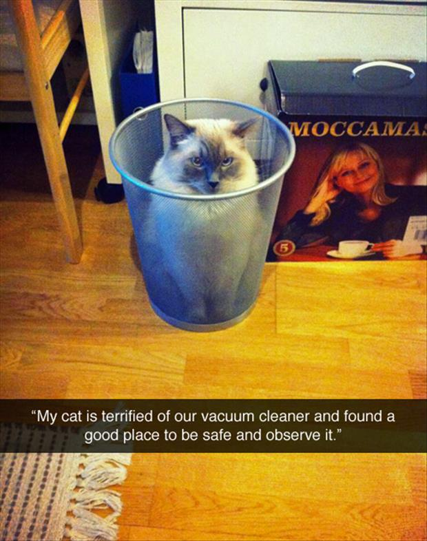 cat hiding from the vacuum cleaner
