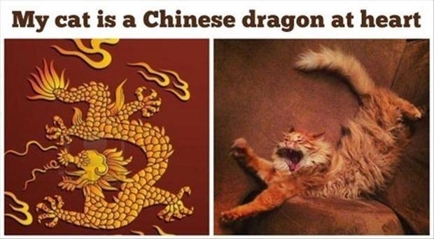 cat is a dragon