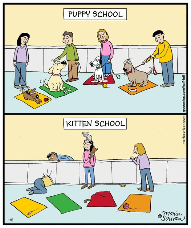 cat school vs dog school
